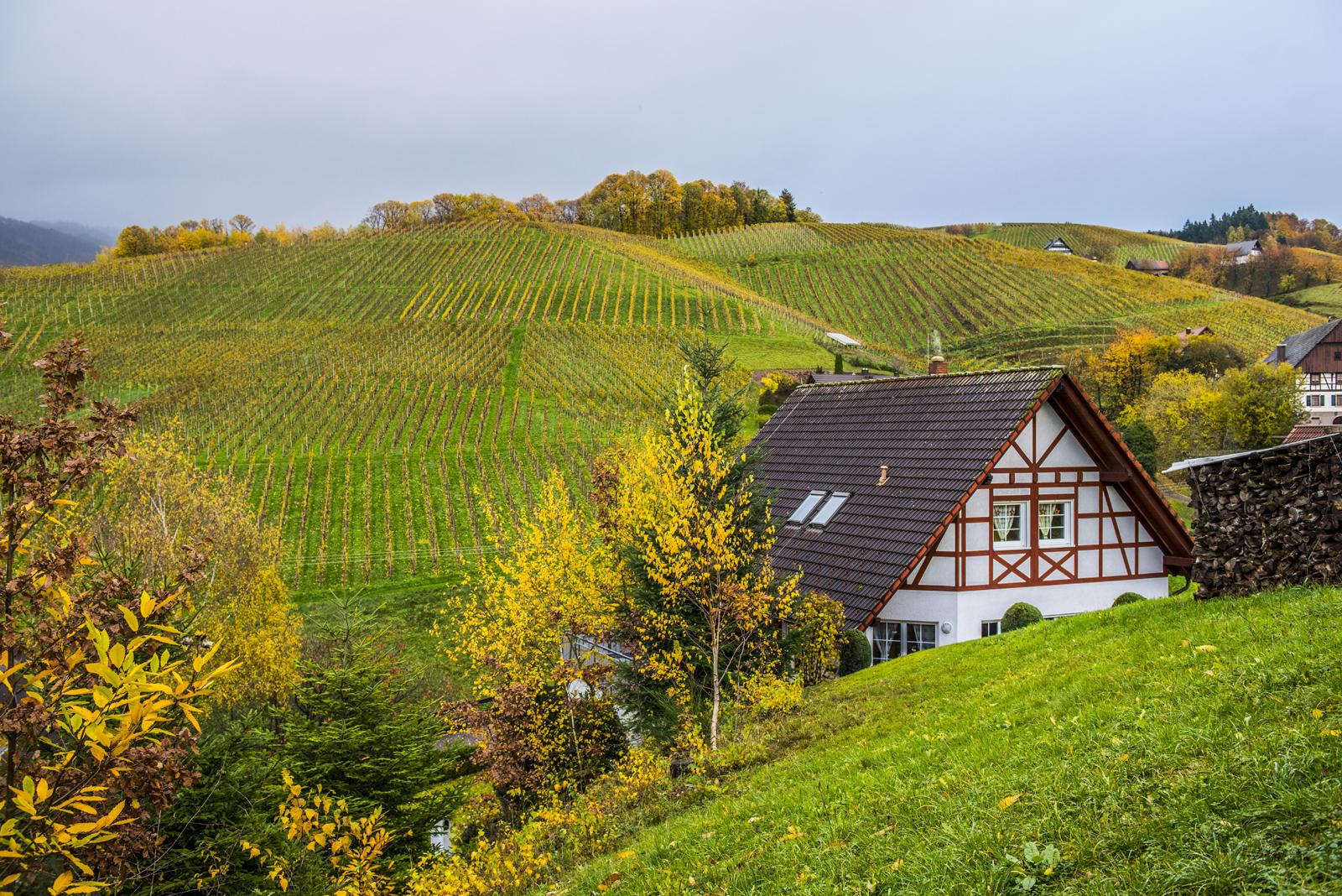 Осенний Эльзас