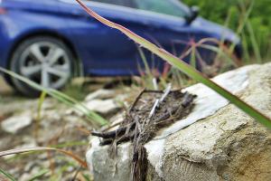 Peugeot 308 GT Line. Бэксайд ©Фото ЮГА.ру
